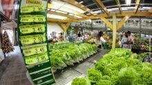 Salada não passa despercebido e preço da alface dispara em Campo Grande