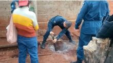 Sobrinha que matou o tio tem prisão preventiva decretada e vai para presídio em Campo Grande