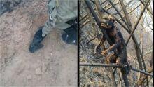 Vídeo: Bombeiros fazem enterro digno para macaquinho morto em incêndio em MS