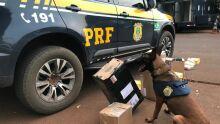PRF faz operação contra drogas enviadas pelos Correios em Campo Grande