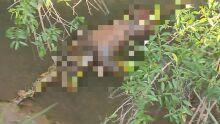 Corpo é encontrado em córrego de Campo Grande