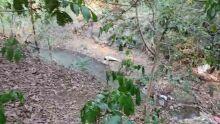 Cadáver achado em córrego estava de short e calcinha, diz polícia em Campo Grande