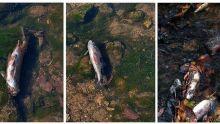 Mortes de peixes assustam e suspeita é estação de esgoto em Alcinópolis