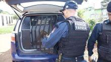 Rapaz mete soco na prima na frente de policiais e acaba preso no Lageado