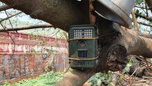 Instituto amplia monitoramento de onças-pintadas em Corumbá