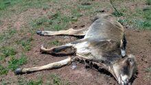 Fazendeiro deixa dezenas de animais morrerem sem comida e é multado em R$64 mil