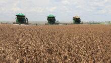 Economia de MS cresce 4,9% e destaque é da agropecuária, diz Governo