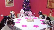 Com direito a valsa: cachorra ganha festa de 15 anos e comemora ao lado dos 'irmãos'