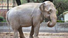 Elefanta deixa Argentina e passa a viver em zoológico brasileiro