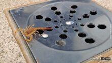 Menina de quatro anos fica em estado grave depois de ser picada por escorpião