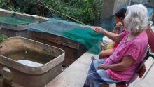 Idosa ganha 'pesqueiro' improvisado pelo filho em caixa d'água