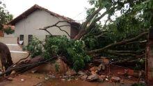 Temporal destelha casas e derruba árvores em Dourados