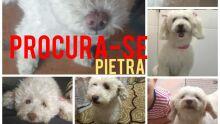 Você viu a Pietra? Família pede ajuda para encontrar fujona xodó da casa