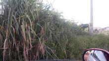 Moradora desabafa sobre terrenos sujos no Bosque da Saúde: 'virou criadouro de ratos'