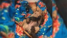 ADOÇÃO RESPONSÁVEL: veterinária busca lar para 'mamãe e filhotinhos de patas' em Campo Grande