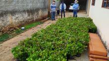 VERDURAS FRESQUINHAS: plataforma online conecta consumidores e agricultores em MS