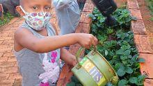 Em tratamento na AACC-MS, crianças aprendem importância de alimentação saudável através do plantar