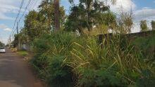 Em via perigosa, mato ocupa calçada e deixa pedestres em risco no Pq. dos Laranjais