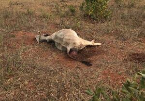 Fazendeiro deixa 70 cabeças de gado sem água e pastagem e é flagrado pela Polícia