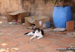 Idosa abriga gatos em condições deploráveis e vizinho denunciam bichinhos doentes