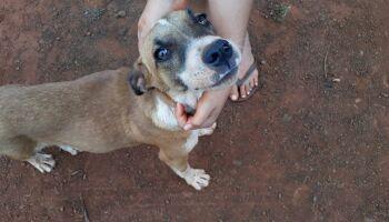 Polícia recebe vídeos de maus-tratos a cachorro e multa idoso em R$ 2 mil