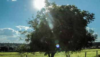 Previsão é de sol e chuvas isoladas neste sábado de Dia das Bruxas em Campo Grande