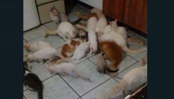 Vídeo: família humilde no Tiradentes passa por dificuldades e doa 20 gatos. Quer acolher?