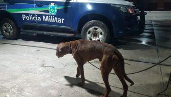 Cachorro vítima de maus-tratos é resgatado pela PM; vídeo é emocionante!