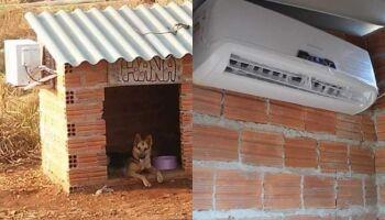 A 'catiora' se deu bem! Casinha de cachorro com ar condicionado viraliza nas redes sociais