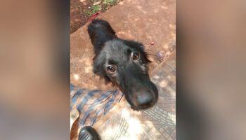 Estudante é autuada por maus-tratos ao deixar cachorro sem água, sem alimentação e doente
