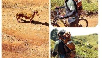 Ciclista resgata doguinho desnutrido e gera comoção em MS
