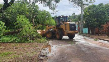 Prefeitura recolhe troncos e galhos de árvores após tempestade em Campo Grande