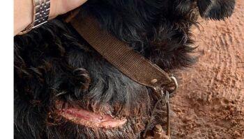 Homem mutila cachorro com facão para fazê-lo parar de latir em MS