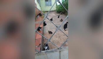 Final feliz: gatinhos que ficaram abandonados após morte de idosa são resgatados