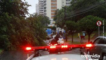 Em poucos minutos de chuva, árvore cai e deixa trânsito lento na Afonso Pena; assista