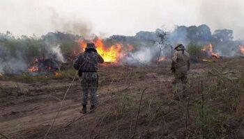 Pantanal caminha a passos lentos para se recuperar de maior devastação da história