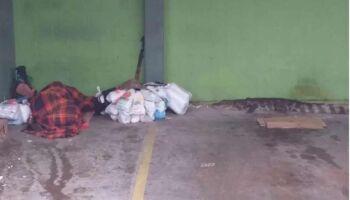 Vídeo: jacaré fica a um metro de morador de rua que dormia em SP