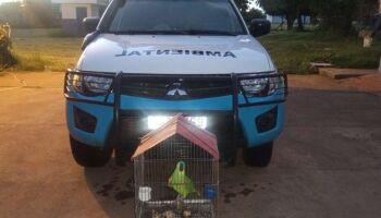 Jovem é multada em R$ 5 mil após ser denunciada por criar papagaio ilegalmente