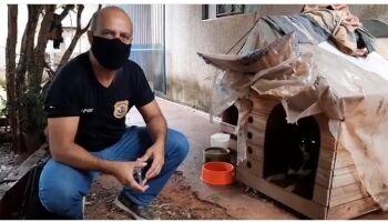 Decat resgata cachorrinha que foi estuprada pelo dono em Campo Grande