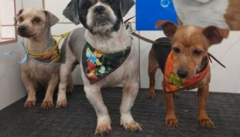Idosos morrem de Covid-19 e mais de 30 cachorros ficam abandonados