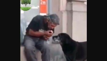 Vídeo: morador de rua divide o pouco lanche que tem com cachorrinhos e cena comove