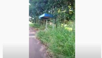 Vídeo: mato esconde pontos de ônibus no Vivendas do Parque