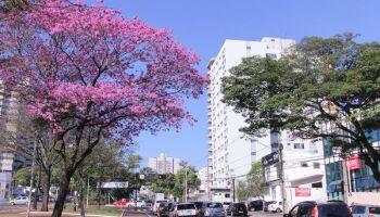 Campo Grande é reconhecida pela 2ª vez seguida como uma das mais arborizadas do mundo