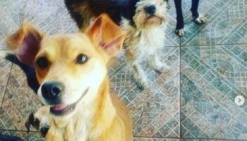 Vamos ajudar? Ração de ONG para cães e gatos acaba em Campo Grande