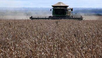 Enquanto a miséria aumenta, MS bate recordes na produção da soja