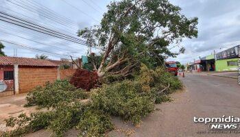 Bombeiros removem árvore gigantesca caída em escritório de Campo Grande