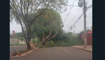 Árvore caída em tempestade impede trânsito no Coophatrabalho