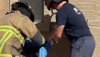 Gato sumido é achado vivo dentro de parede de concreto (veja o vídeo)