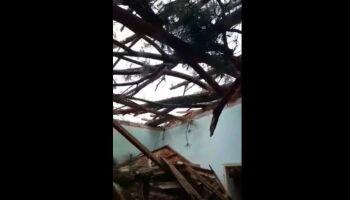 Casa é interditada após árvore gigantesca cair sobre ela em MS