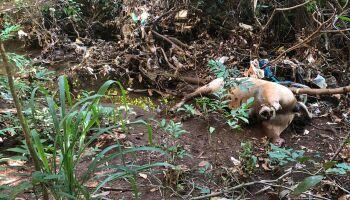 VÍDEO: corpo de cavalo é encontrado em estado de decomposição em Campo Grande